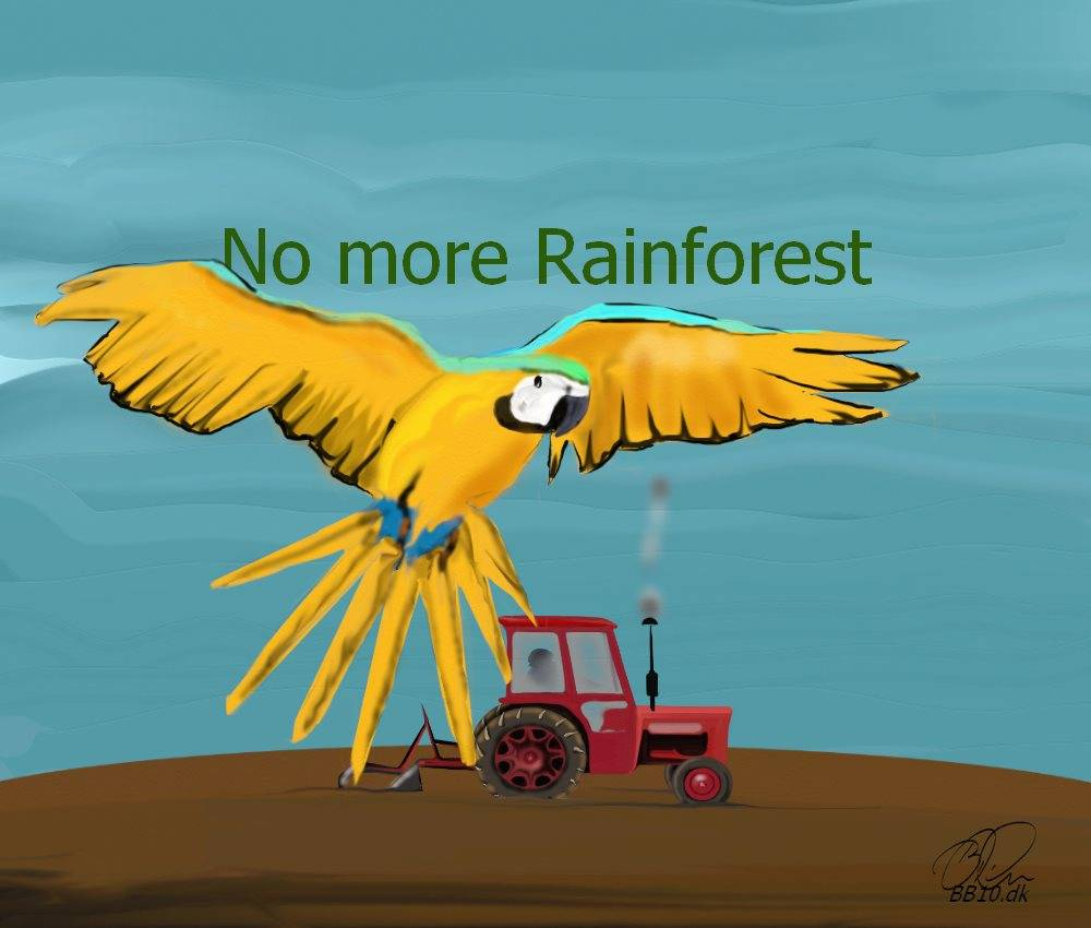 Rainforest No more