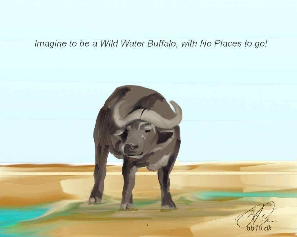 Water Buffalo Heifer International