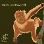 Rainforest Orangutan