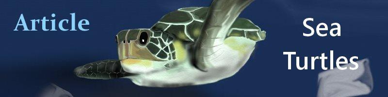 Sea Turtles Org