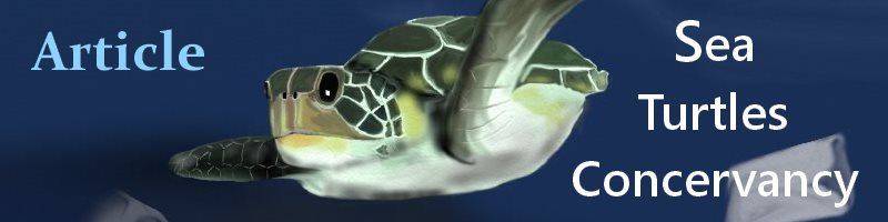 Sea Turtles Sea Turtles Conservancy
