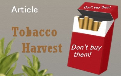 Tobacco Plants Tobacco Harvest