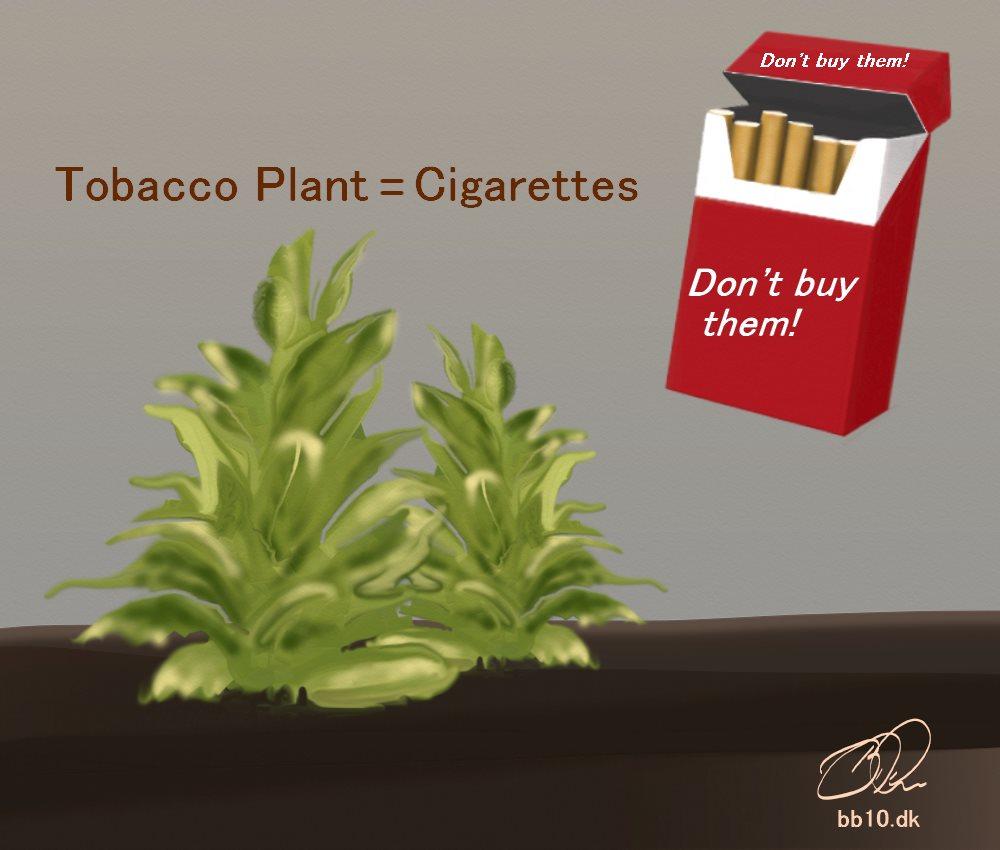 Tobacco Plants Tobacco Atlas