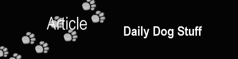Daily Dog Stuff
