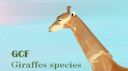 Giraffes Conservation