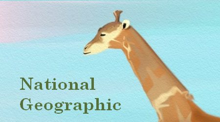 National Geographic Giraffes