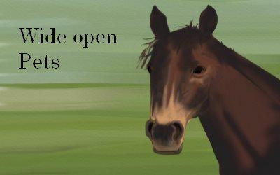 Horse Wide open Pets