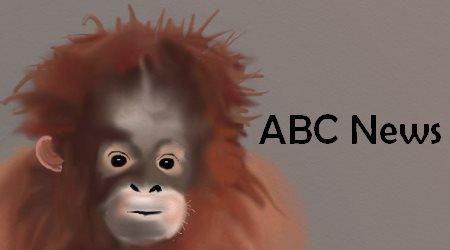 Orangutan abc net news science
