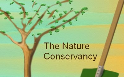 Article Plant a Tree The Nature Conservancy
