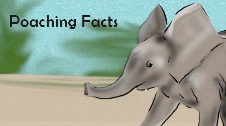 Elephant on the Run Poaching facts