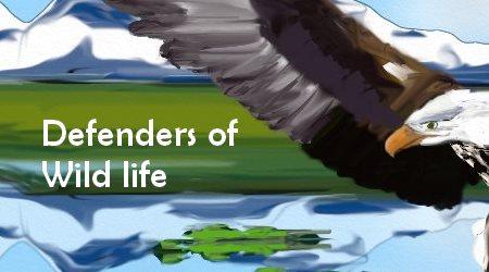 Defenders of WildLife Bald Eagles