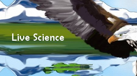 Bald Eagles Life Science
