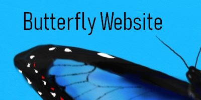 Butterfly Butterfly Website