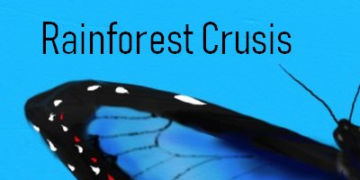 Butterfly Rainforest Cruises