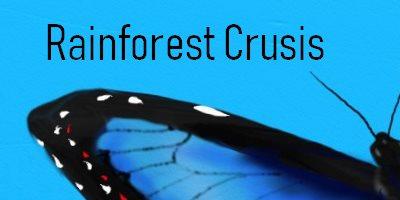 Rainforest Cruises Butterfly