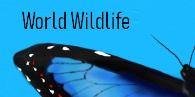 World Wildlife Butterfly