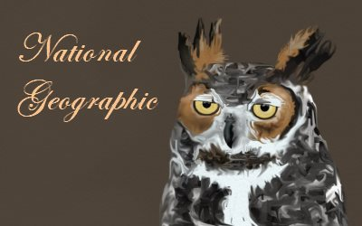 National Geographic Owl