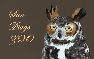 San Diago ZOO OWL