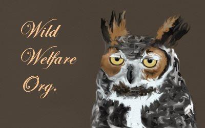 Wild Welfare Organisation Owl
