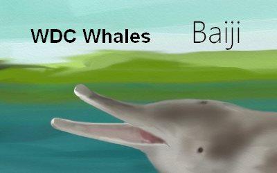 Dolphin Baiji  WDC Whales