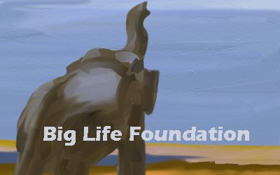Article Elephant Big Life Foundation