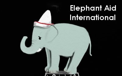 Article Elephant Elephant Aid International