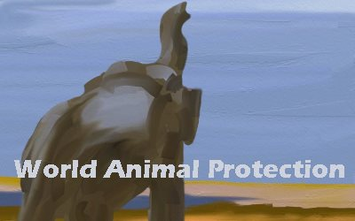 World Animal Protection Elephant