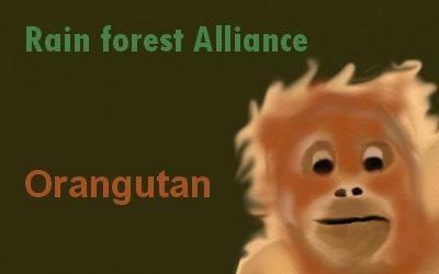 Article Rainforest