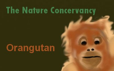 Article Rainforest Orangutan