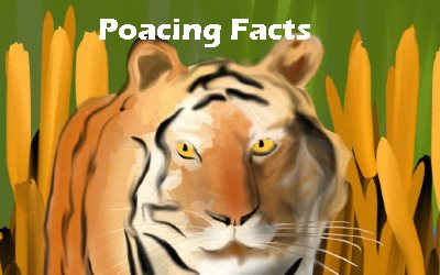 Tigers Poaching Facts