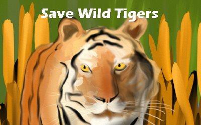 Tigers Save Wild Tigers