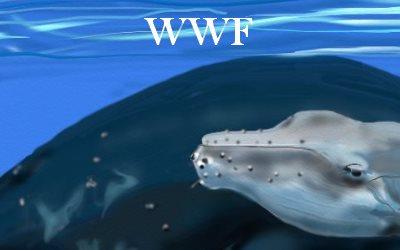 Humpbacks WWF