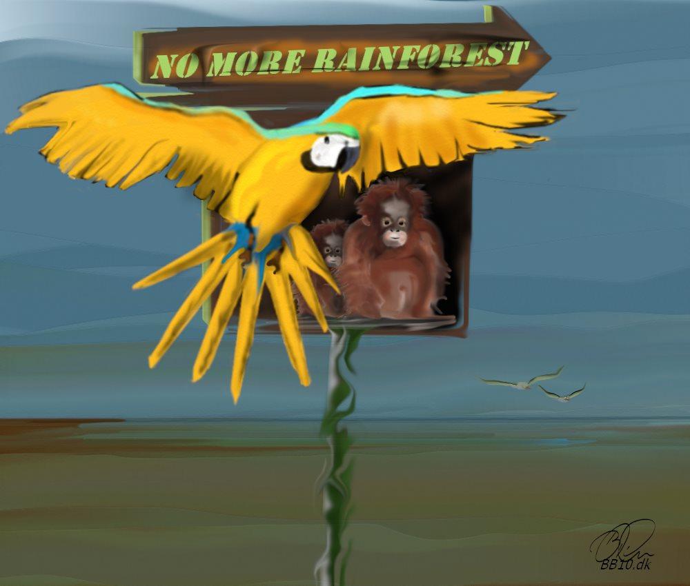 No more Rainforest