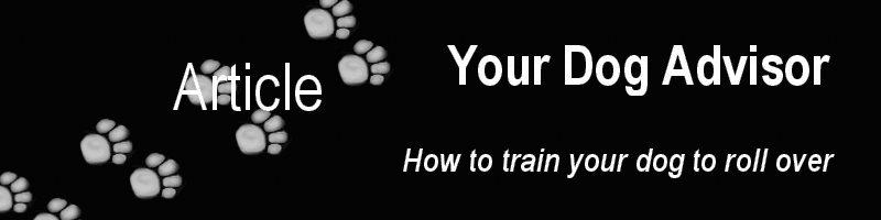 Your Dog advisor