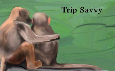 Article Monkeys Trip Savvy