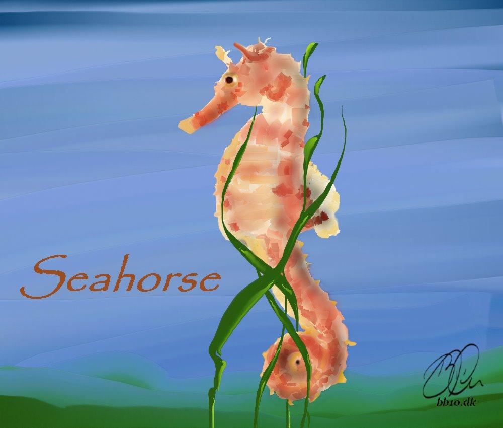 Seahorse Ocean Conservancy