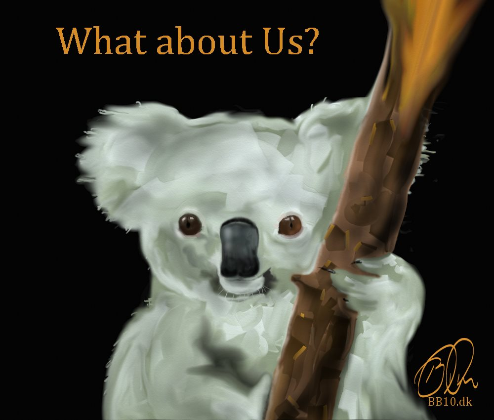 Koala Bear National Geographic