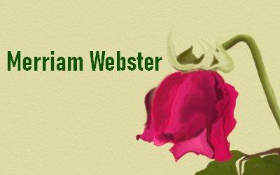 Article Merriam Webster
