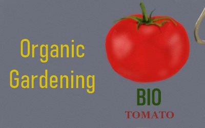 Article Bio Tomato Organic Gardening