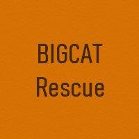 Fur BigCat Rescue