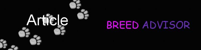 Breed Advisor Dog