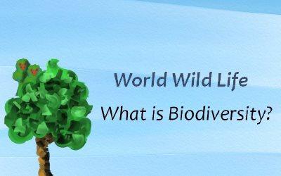 World Wild Life