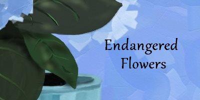 Endangered Flowers Flowers & Plants