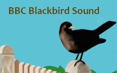 BBC Blackbird Sound