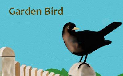 Barden Bird
