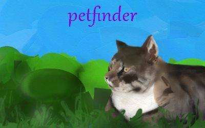 Petfinder Cats