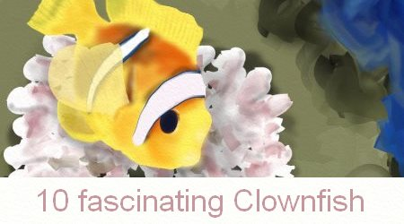 Clownfish Facts