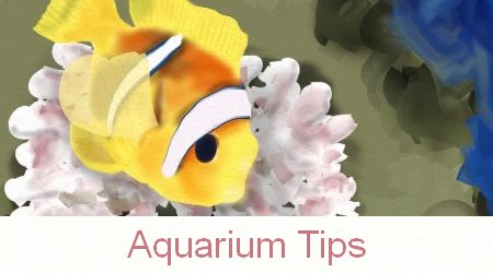 Aquarium Tips