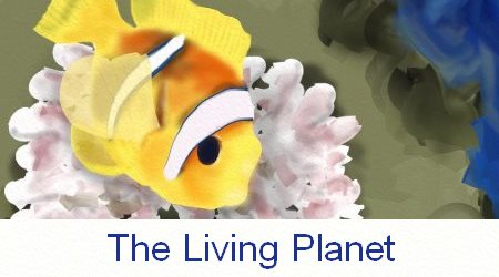 Clownfish The Living Planet