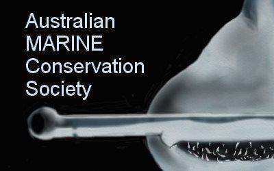 Australia Marine Conservation Hammerhead